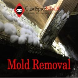 Image of Mold removal