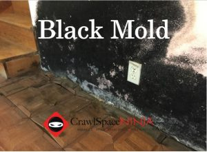 black mold stachybotrys where is it found and what to do. Black Bedroom Furniture Sets. Home Design Ideas