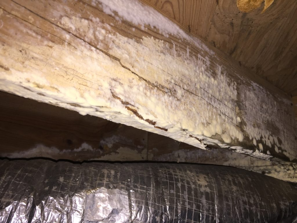 crawl space mold removal image