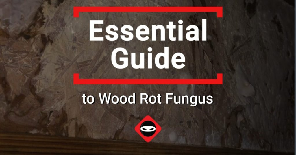 Essential Guide to Wood Rot Fungus image