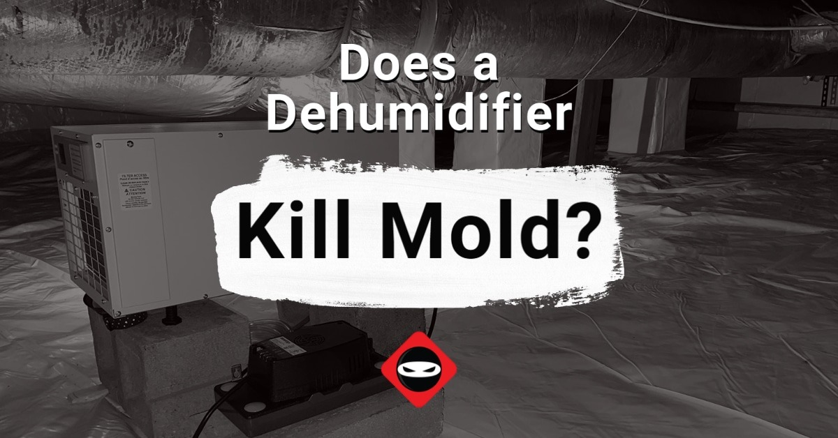 featured image__Does a Dehumidifier Kill Mold