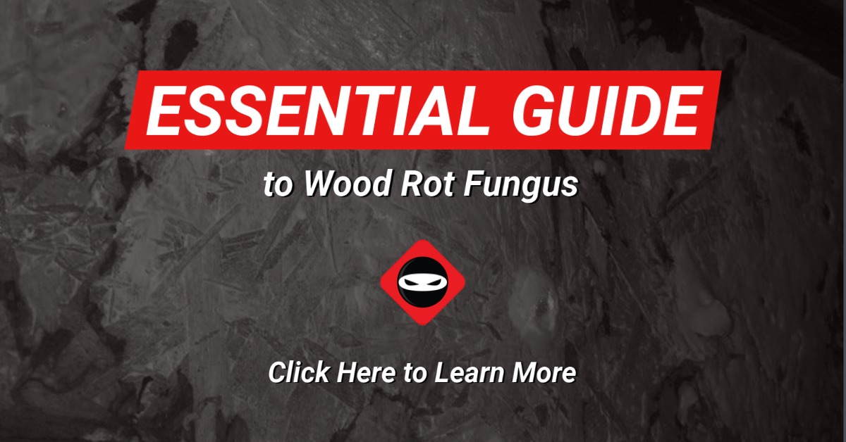 Essential Guide to Crawl Space Waterproofing Image